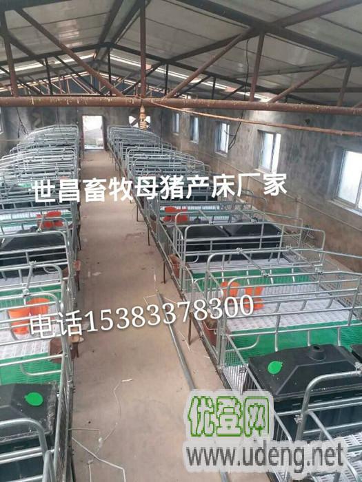豬場安裝哪款養豬設備豬產床防止壓傷小豬