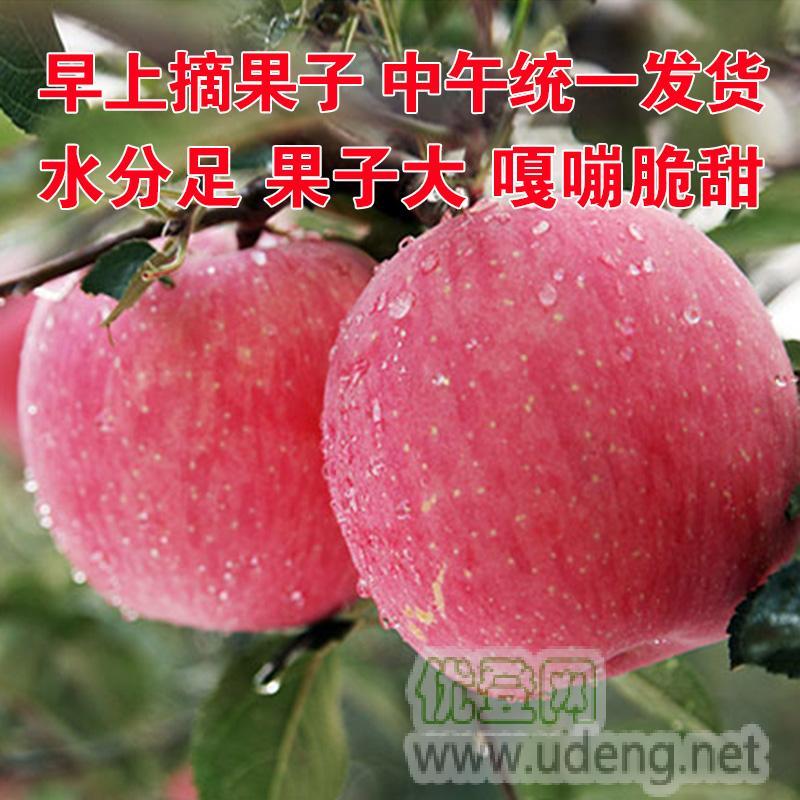 2019蘋果 新鮮蘋果 紅富士蘋果 紅蘋果現摘現發鮮果 河南靈寶sod脆甜水果